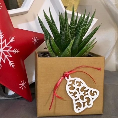 Succulent Plant Box PS/EBell Navidad