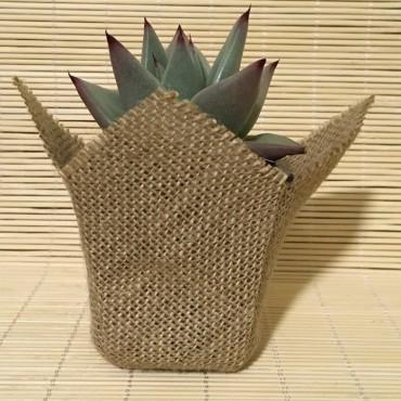 Succulent YUTE (Planta...