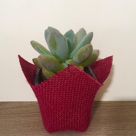 Succulent YUTE (Planta suculenta...