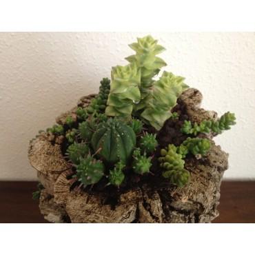 Succulent Glass_Jarra