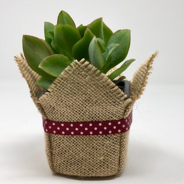 Succulent BASIC CT (Planta...
