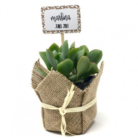 Succulent Rafia (Planta crasa ES)