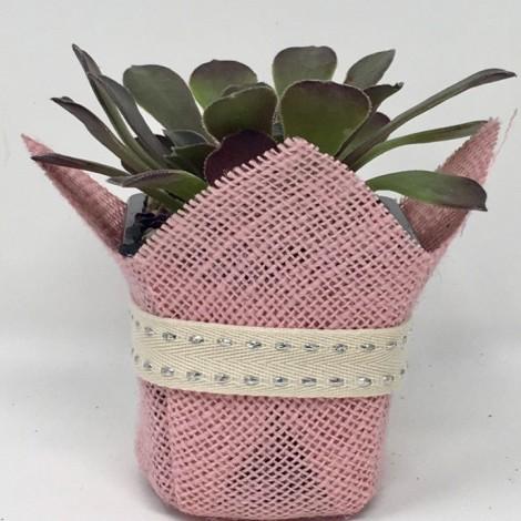 Succulent  LUREX (Planta suculenta en...