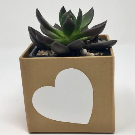 SBPS Succulent Kraft (Planta...