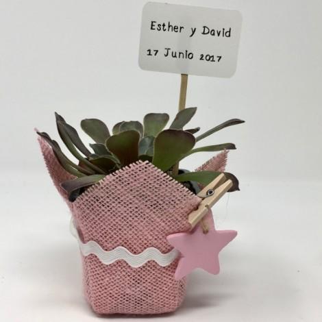 Succulent pink star ES (Planta...