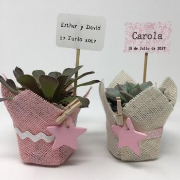 Succulent pink star ES...