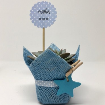 Succulent blue star ES...