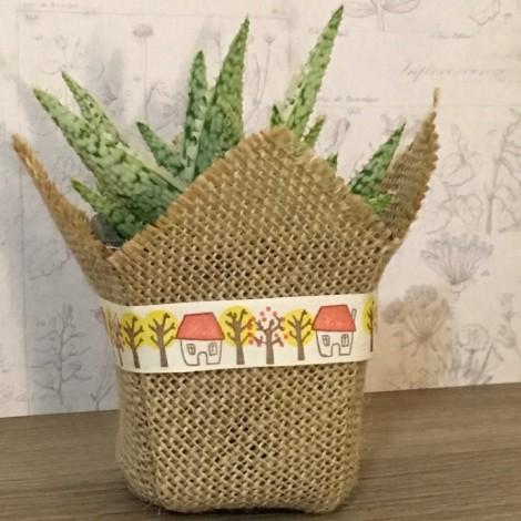 Succulent Algodón CASA (Planta...