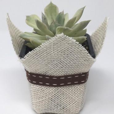 Succulent BASIC CdP (Planta...