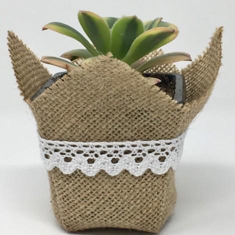 Succulent SPECIAL BOR (Planta...
