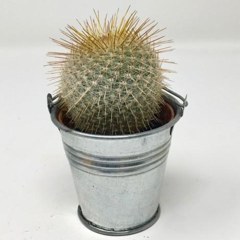 Succulent ZINC CACTUS
