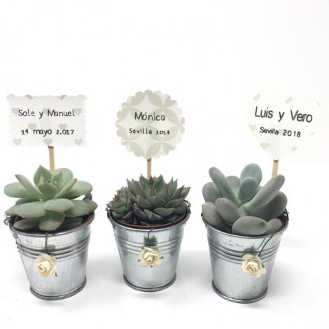 Succulent ZINC/FLOR (Planta suculenta...