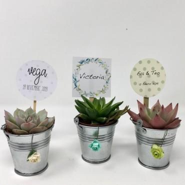 Succulent ZINC/FLOR (Planta...