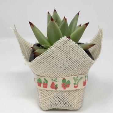 Succulent Algodón CACTUS