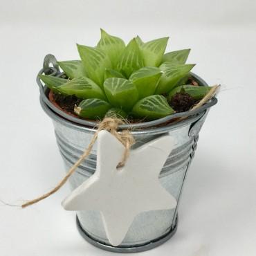Succulent ZINC Star