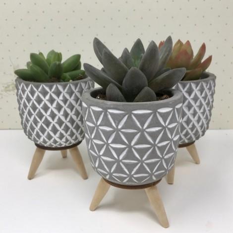 Succulent concrete
