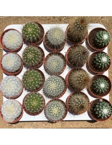 Bandeja 20 cactus