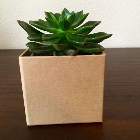 Succulent KRAFT (Planta suculenta +...