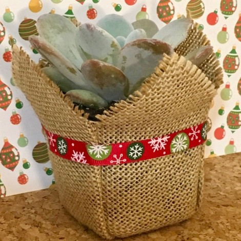 Succulent Plant Navidad Gros Grain