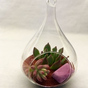 Succulent  Glass_Lagrima