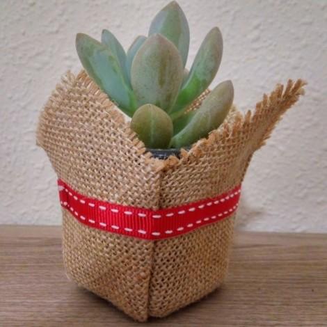 Succulent BASIC CdP (Planta crasa)