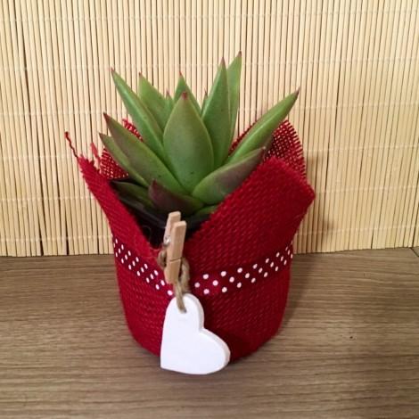 Succulent Red Corazón (Planta...