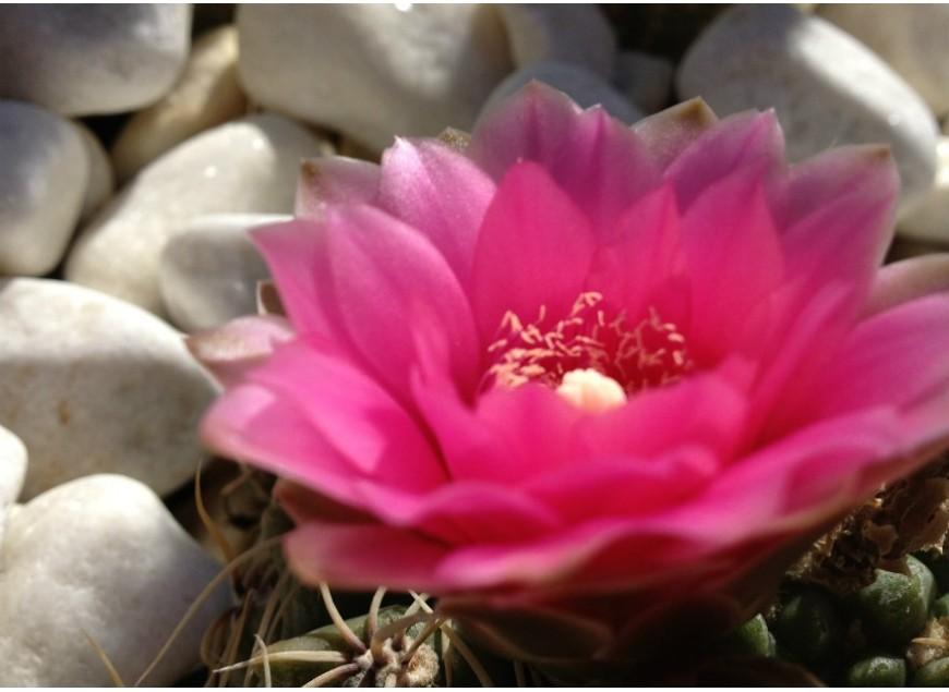 Como han conseguido las plantas suculentas adaptarse a la sequia