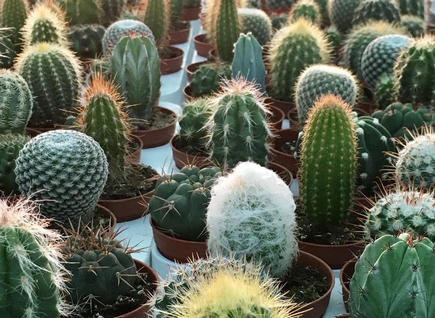 Guía básica para el cuidado de las plantas suculentas